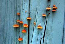 blue / blue inspirations / by Marylene Lynx