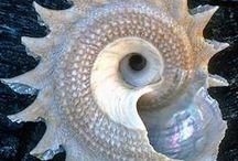 spirals / by Marylene Lynx