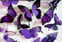 Butterflies! / My favorite!! / by Talea Limonciello - Merrison
