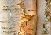 birch / by Marylene Lynx