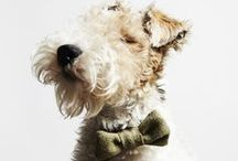 Dogs / by Style Me Sweet Design | Mandy Bingham