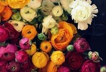 flora. / by { anne }