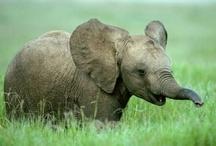 ELEPHANTS <3 / by Kennethnjoy Fields