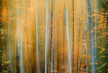 light of the world / by Robin Neher