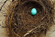 egg hunt / by Robin Neher