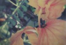 Garden of Earthly Delights / Floral,Organic, Encaustic  paintings and Photographs / by Helen DeRamus