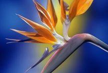 Flora / by Kylie N
