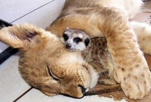 A Great Example for How to Live: Strength & Tenderness / by Victoria Polo