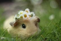 just stinkin' cute / by Mary Kathryn