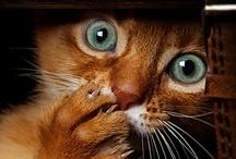 cat / by Eri Tsuji