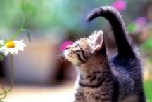 Cute Animals / by Trisha Griffin