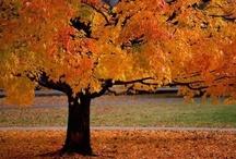 Autumn / by Mary Kathryn