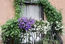 What's in YOUR Yard? / Gardening, Patio, Backyard / by Kathy Doyle
