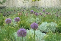 Garden / by Roger Short