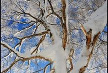 Winter Wonderland / by Susan Richter