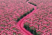 Roads   Pathways / by Eva Potter