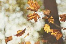 🍂  fall  🍂 / by CeAnn