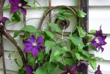 Garden ideas / by Shawna Forrester Mitchell
