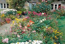 Garden / by Jamie Gonigam