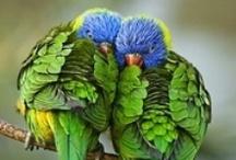 Birds/Butterflies / by Patty Goodwin