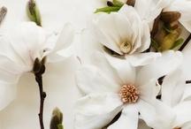 Flowers / by Melanie English