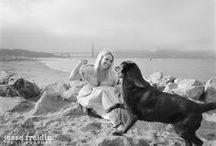 Dogs on Film- Dog Photography / One of America's leading fine art dog photographers. Los Angeles + San Francisco pet photography. www.jessefreidin.com  / by Jesse Freidin