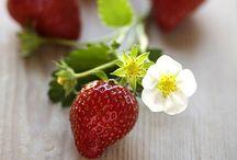 Gastronomic / Epicurean flavor explosion for your taste buds. / by Rosanna Harborne