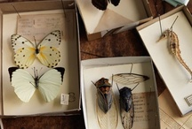 The Art In Preserving Insects / by Yawn Bitty Miller