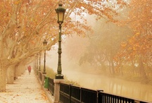 Autumn Beauty / by Anna Nuttall