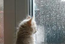Rainy Day / by Anna Nuttall
