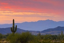 """Arizona-""""But, it's a dry heat."""" / """"The trip across Arizona is just one oasis after another.  You can just throw anything out and it will grow there, I like Arizona"""".  ~Will Rogers / by Tamara Mitchell"""