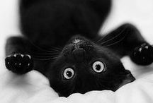 Kitties! / by Makayla Davis
