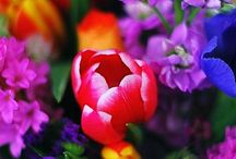 Pretty Flowers / by Ann Scollard