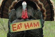 Thanksgiving / by Lynda Thomas