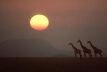 Kenya / by Debbie Halvorson