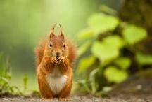 Sweet Squirrels / by Yvonne Mac