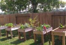 Backyard Gardening / by Planet Weidknecht