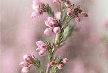 flora / by Heather Terstegge