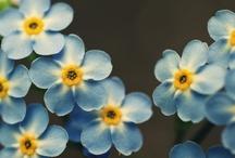 Flowers / by Stacy Goodhart-Elkin