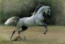 Animals--Land--Horses / by Nina Holdman Rader