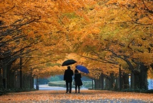 Fall Fall Fall <3 / by Kendall Burkhead