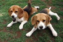 Beagles, Dogs, Cats, and Kittens / by Randee Carreno