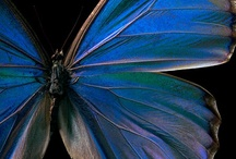 Butterfly World... / Transformation, is what I think about when I see a butterfly... my favorites. / by Taylor Venus