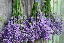 Lavender Love / by Sheila Jackson