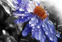 FLOWERS, FLOWERS, EVERYWHERE / by Josephine Falletta Buono