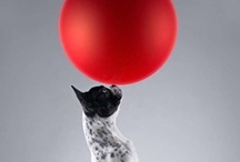 Balloons / by Yvonne Zomerdijk