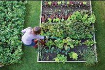 Gardening / by Sarah Beaudoin