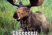 Hahahahaha! / Funnies / by Dena J
