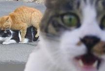 =minou= / ....here kitty, kitty.... / by Burrita de Culpa