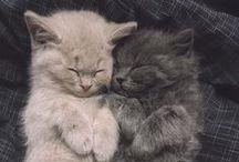 Cute! / by Leone Rensink